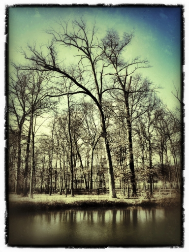 Hidden Hollow Pond