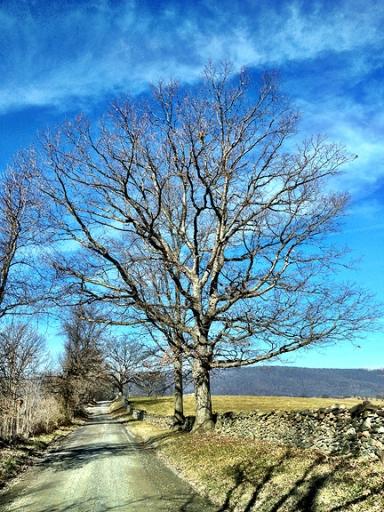 Millville Tree