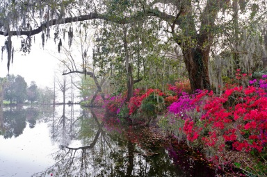 Magnolia Gardens in South Carolina