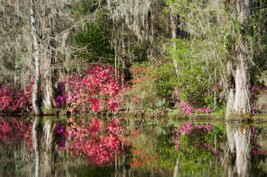 Reflections of Magnolia Gardens