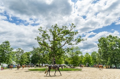 A Day in Upperville