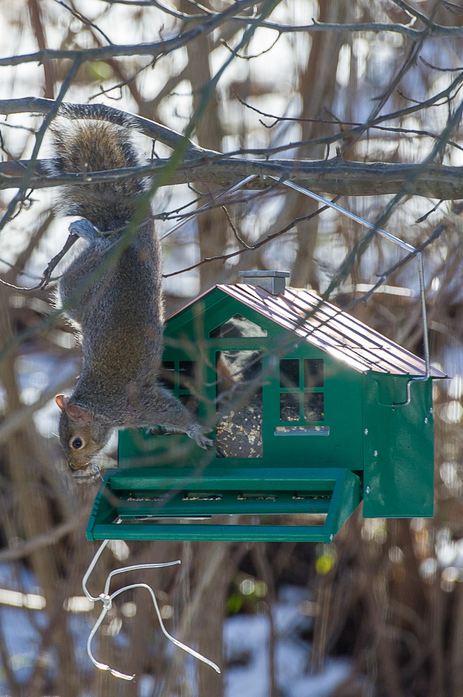 2013-01-10_Squirrels_Booker_0001