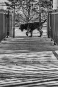 Annapolis Dog