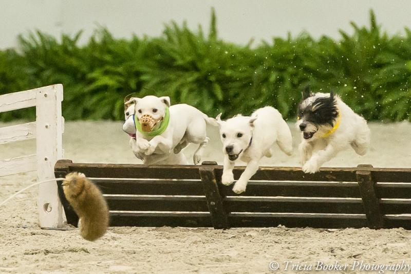 Terrific terriers!