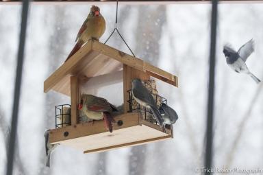 2014-03-03_Birdfeeder_Booker_0002