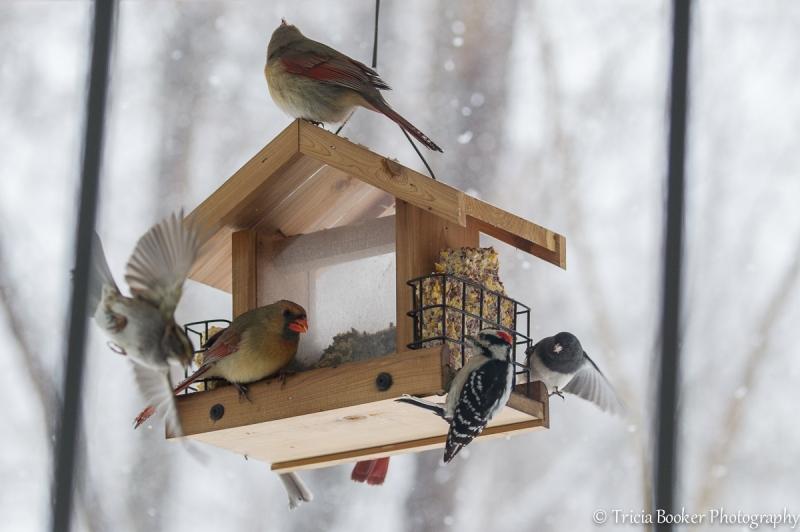 2014-03-03_Birdfeeder_Booker_0019