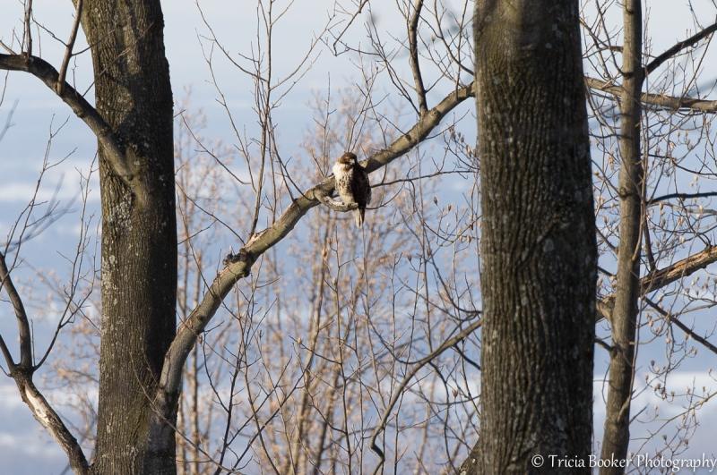 2014-03-04_Birds_Booker_0050