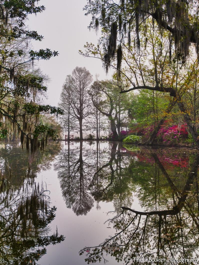 Magnolia Gardens Reflection