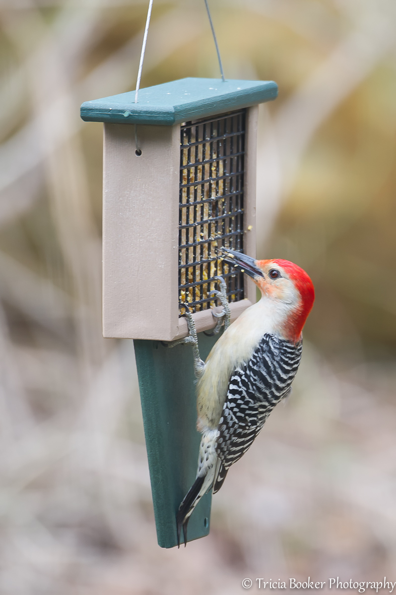 2014-04-22_Woodpeckers_Booker_0004-Edit-Edit