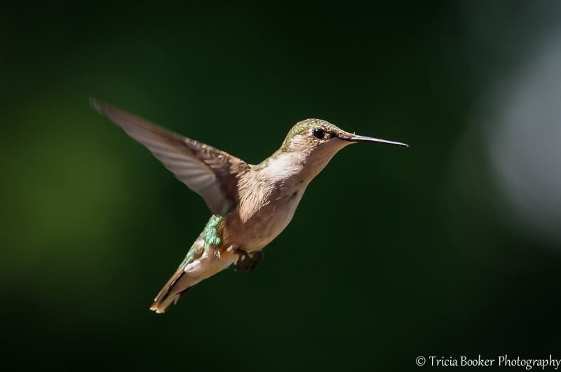 2014-08-03_Hummingbirds_Booker_0001-Edit-Edit