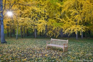 2013-11-01_Arboretum_Booker_0076-Edit-Edit