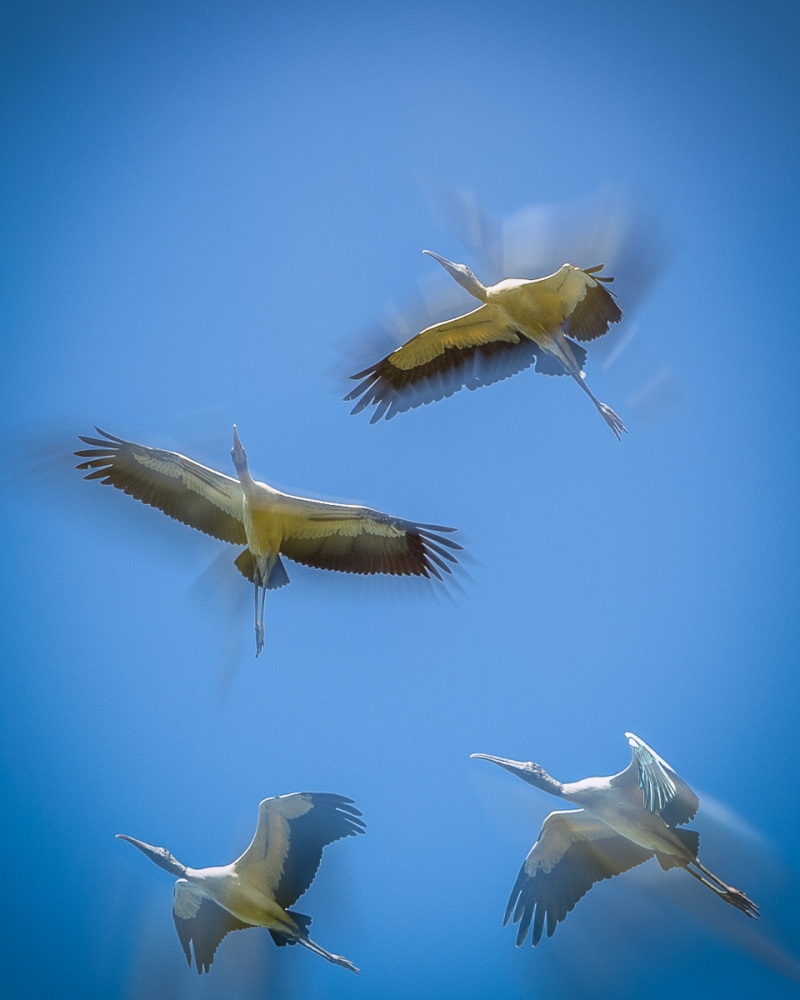 2014-10-18_Birds_Booker_0184-Edit-Edit-2