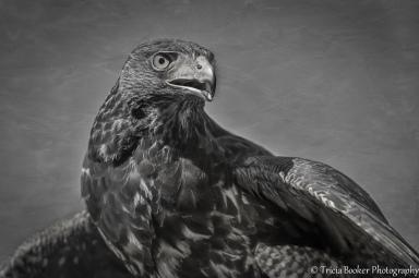 2014-10-18_Birds_Booker_0336.2