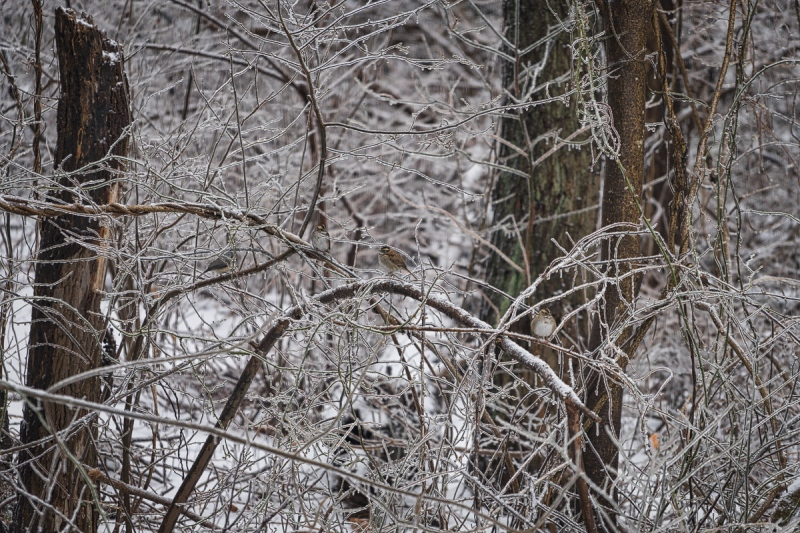 2015-01-25_Winter_Booker_0038-Edit
