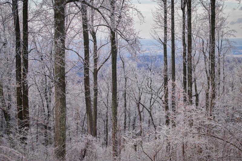 2015-01-25_Winter_Booker_0040-Edit