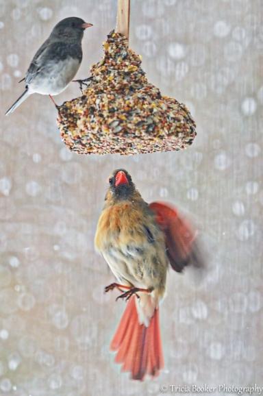 2014-02-25_Birds_Booker_0033-Edit