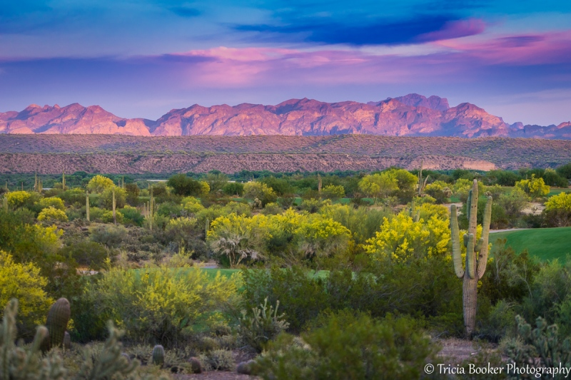 2015-04-17_Arizona_Booker_0255