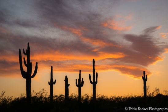 Saguaro Sunset
