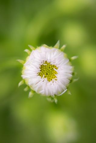 2015-05-08_Flowers_Booker_0076-2