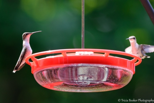 2015-06-30_Hummingbirds_Booker_0007