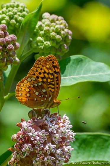 2012-06-08_Butterfly_Booker_0026