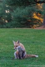 2015-11-05_GolfFox_Booker_0176