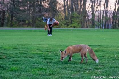 2015-11-05_GolfFox_Booker_0189