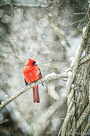 2014-02-25_Birds_Booker_0050-Edit-Edit-Edit-2-Edit-Edit