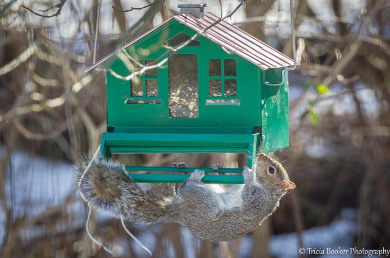 2013-01-10_Squirrels_Booker_0044