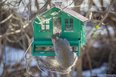 2013-01-10_Squirrels_Booker_0045