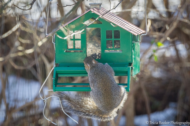 2013-01-10_Squirrels_Booker_0045