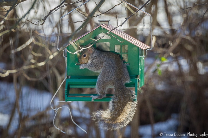 2013-01-10_Squirrels_Booker_0046