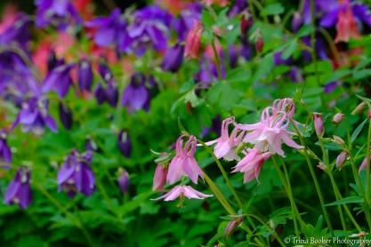 2016-04-29_Flowers_Booker_0032